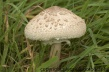 fungi-1